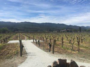 Kronos vineyard