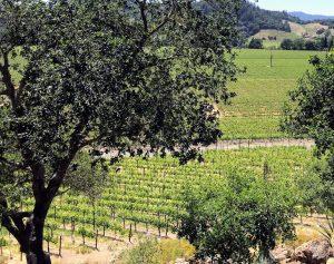 Malk Vineyards